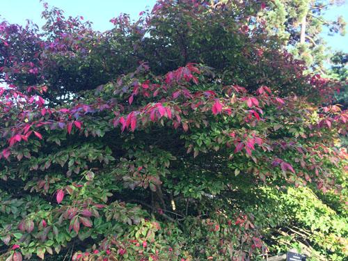 National Botanical Gardens in autumn7