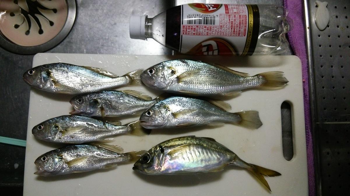 0824 ふれーゆ裏釣果