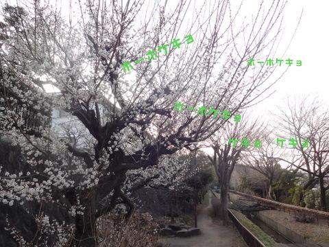 DSC05472-2.jpg