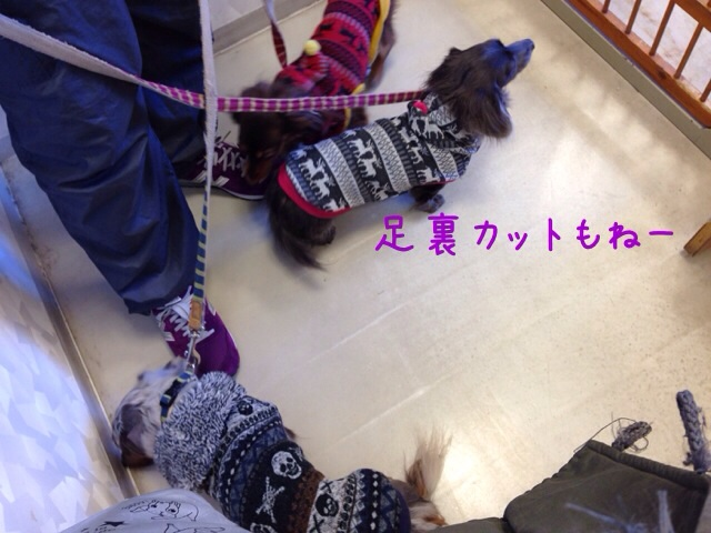 20140310090004c66.jpg