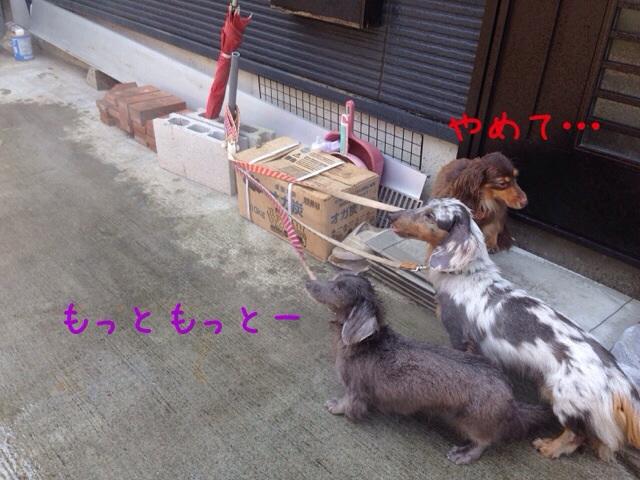 20140731194636980.jpg