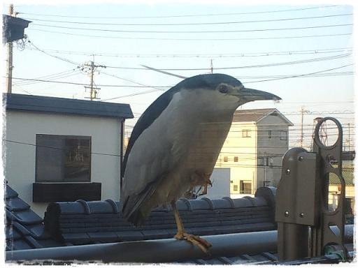なんの鳥?