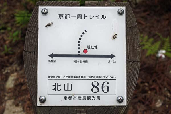 140729sawa58b.jpg