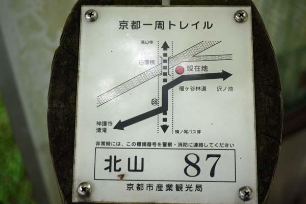140729sawa62b.jpg