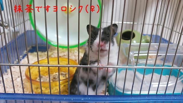 rakugaki_20140227185401748_convert_20140301195206.jpg