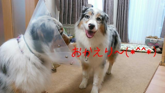 rakugaki_20140609192244185_convert_20140610222232.jpg