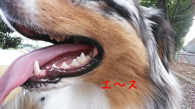 rakugaki_20140823221605331_convert_20140824030937.jpg