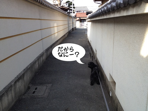 20140427193559fa4.jpg