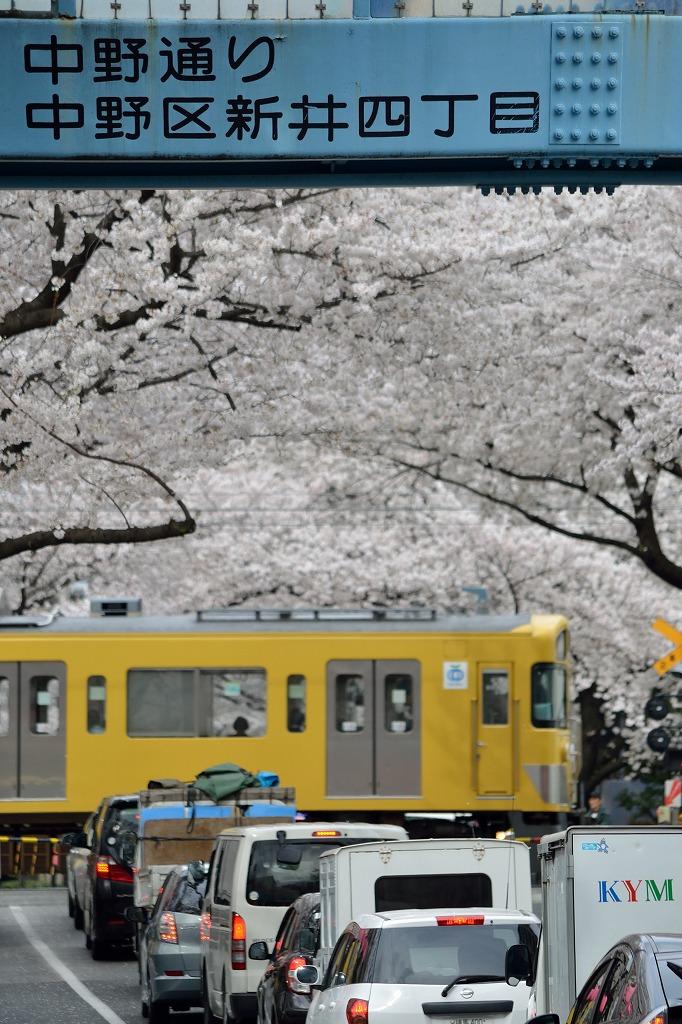 桜×西武線1_140402