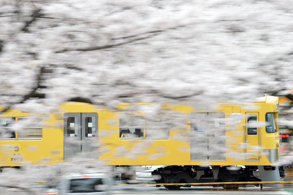 桜×西武線3_140402