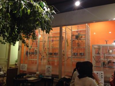鳥のいるカフェ バードスタッフ・雰囲気