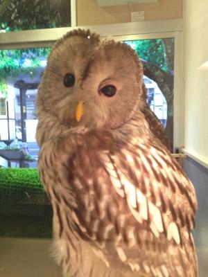 鳥のいるカフェ バードスタッフ・フクロウ
