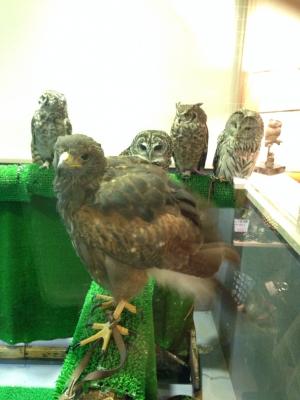 鳥のいるカフェ バードスタッフ達