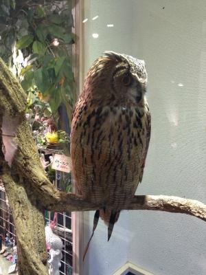 鳥のいるカフェ バードスタッフ・ラク