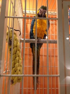 鳥のいるカフェ バードスタッフ・インコ
