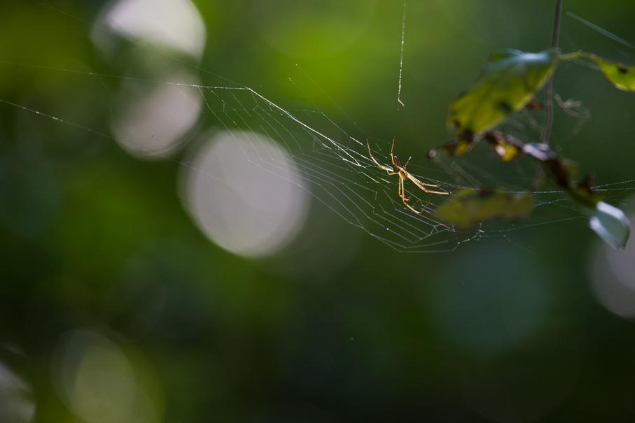 140418クモの巣2
