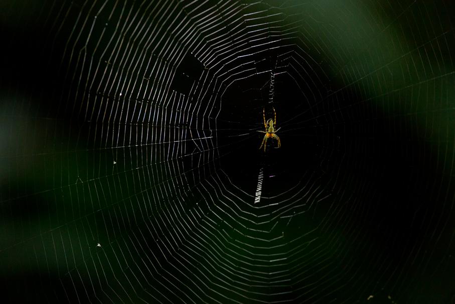 140418クモの巣1