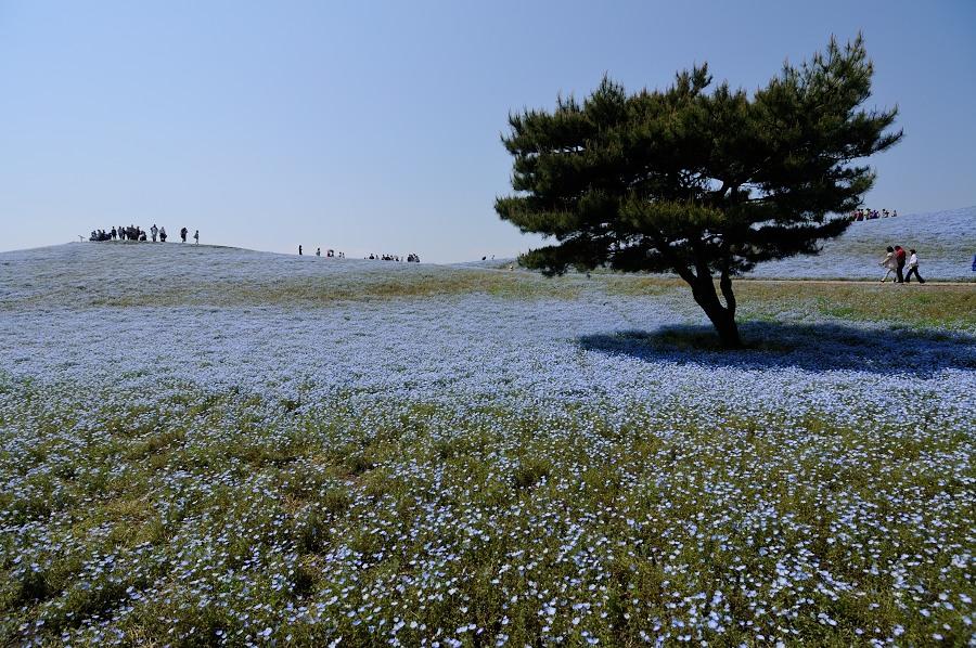 ひたち海浜公園__06