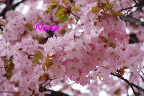 flower1-10.jpg