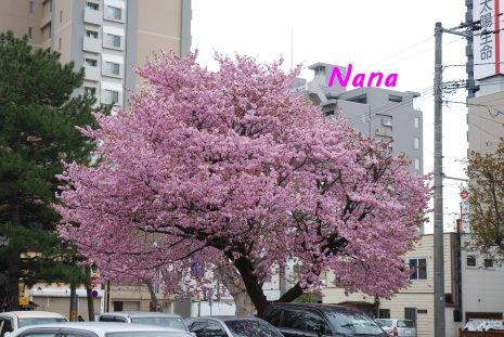 flower1-11.jpg