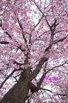 flower1-13.jpg