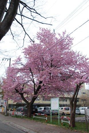 flower1-14.jpg