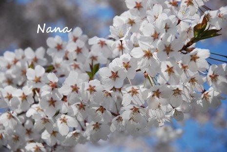 flower1-15.jpg