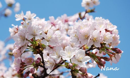 flower1-17.jpg