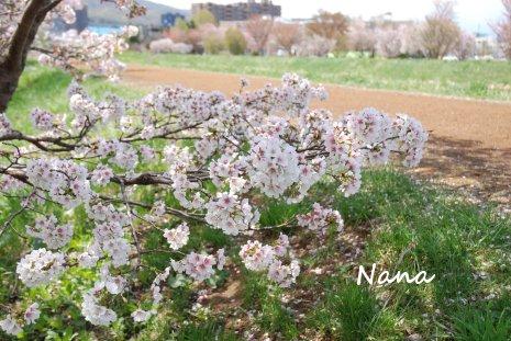 flower1-18.jpg