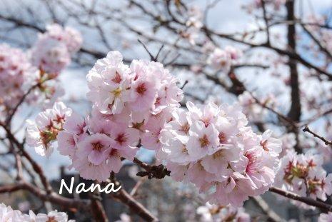 flower1-19.jpg