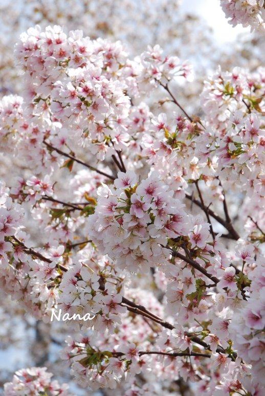 flower1-20.jpg