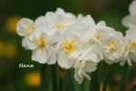 flower1-22.jpg