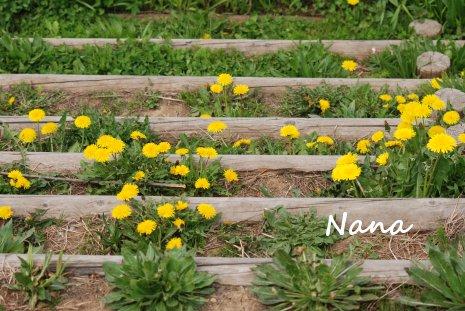 flower1-23.jpg