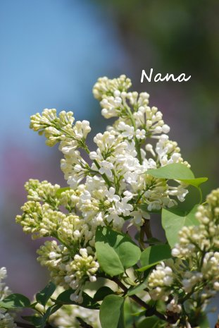 flower1-24.jpg