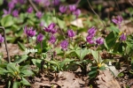 flower1-3.jpg