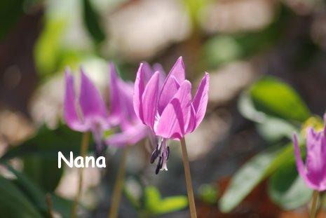 flower1-4.jpg