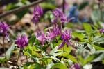 flower1-7.jpg