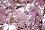 flower1-9.jpg