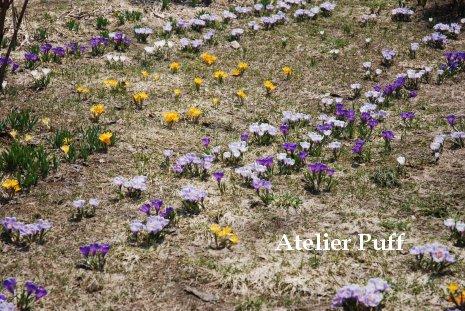 flower2-1_20140502134428867.jpg