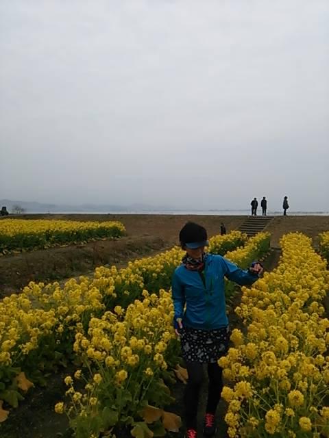 滋賀菜の花畑