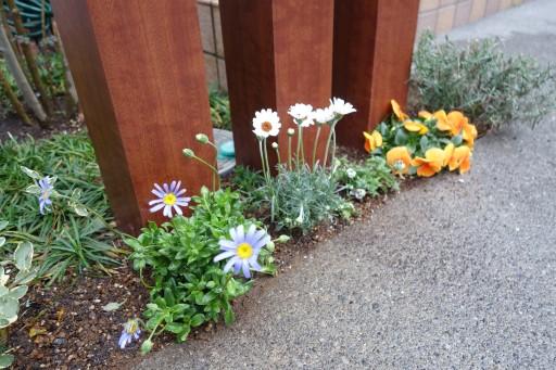 玄関 ポスト 植物