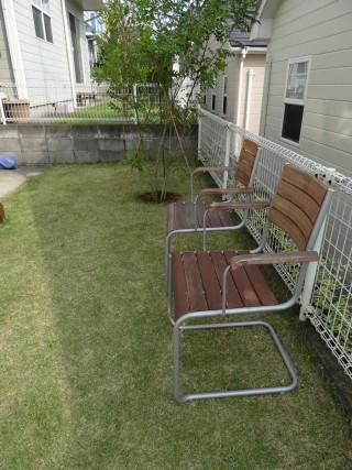 庭 シマトネリコ 植栽