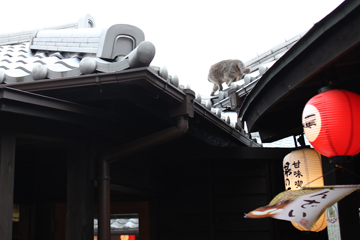 屋根にねこが