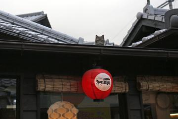 屋根にロシアンブルー
