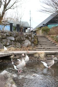 金鱗湖の住民