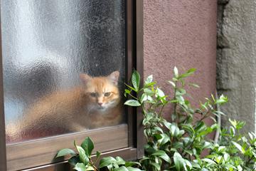窓越しに目線があいます