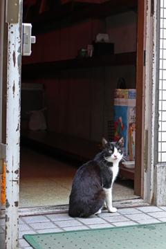 商店さんのネコ ぶっち
