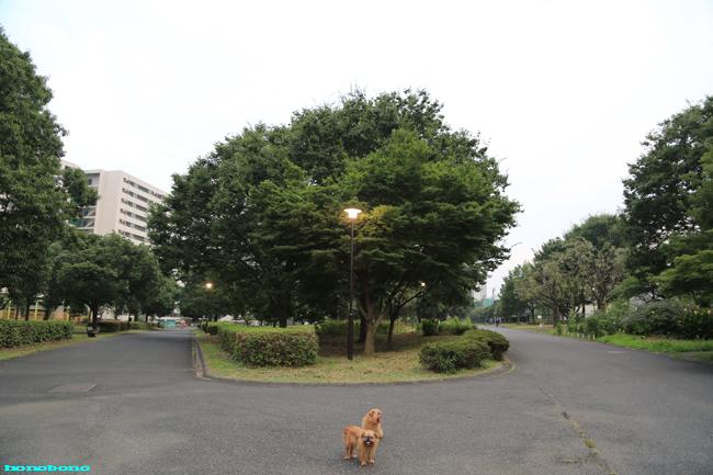 099-wa-6.jpg