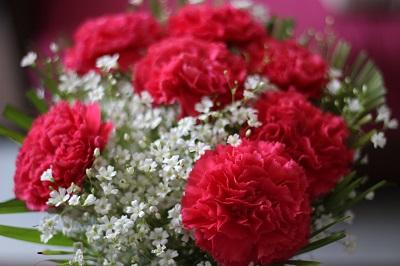 flower-carnation.jpg