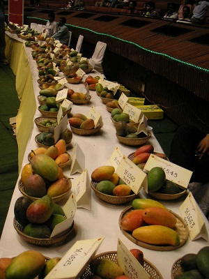 mango-sample1.jpg
